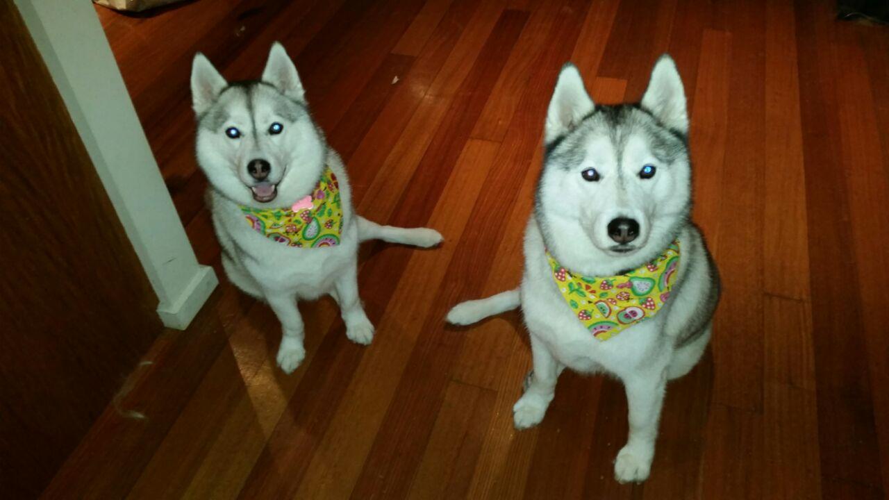 Billy et Zia, les chiens de Geneviève